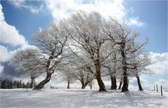 Der Reigen der alten Bäume ...