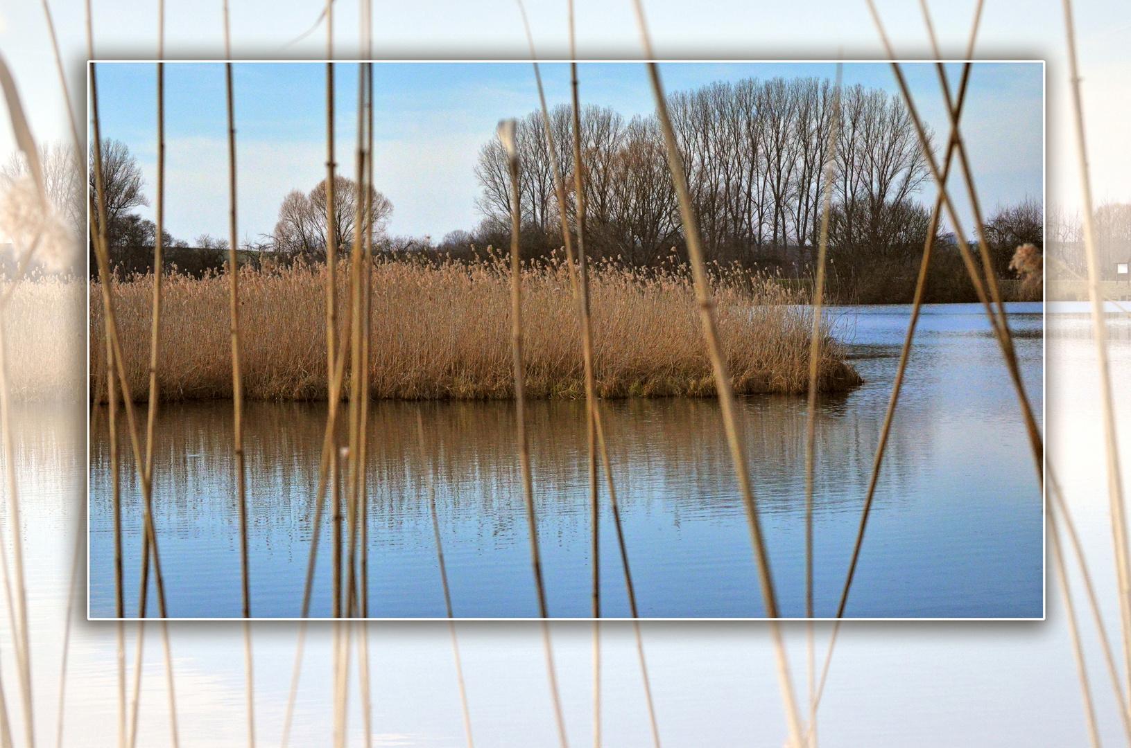 Der Reinheimer Teich im März