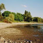 Der Rhein bei Niedrigwasser - 03