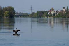 der Rhein bei Rheinfelden