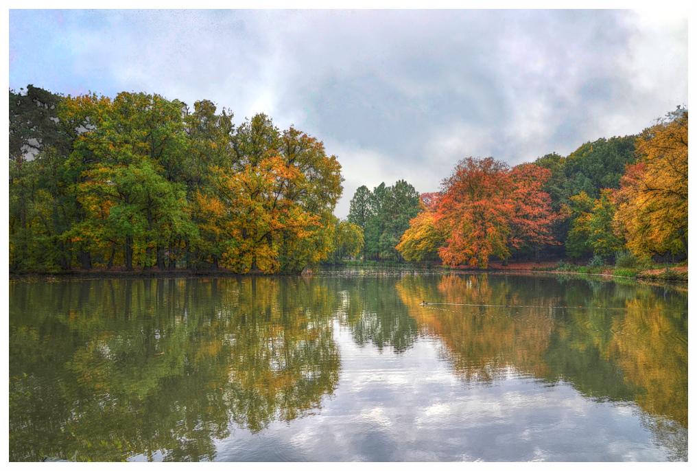 Der Rheydter Stadtwald im Herbst