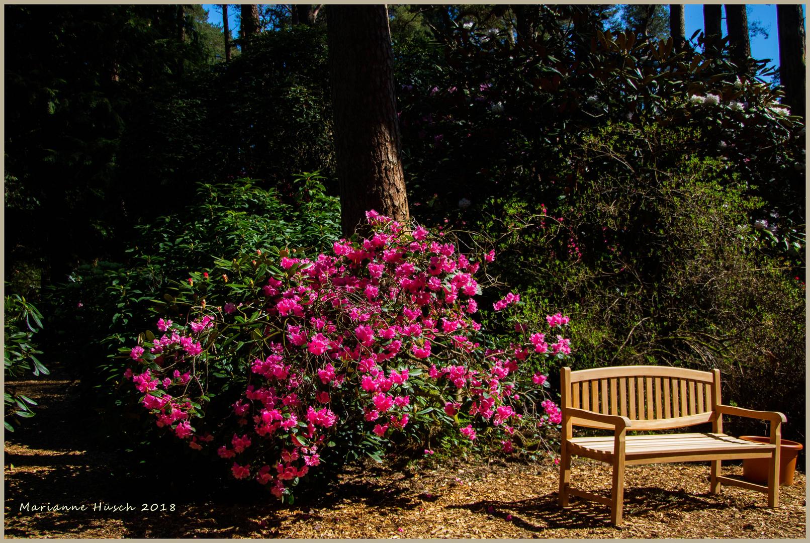 Der Rhododendronpark in Linswege