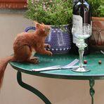 der richtige Wein?