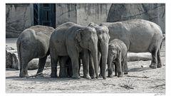 Der Ring der Elefantentanten...