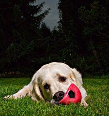 ...:::der rote Ball:::...
