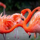 Der Rote Flamingo