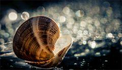Der Ruf des Meeres ...