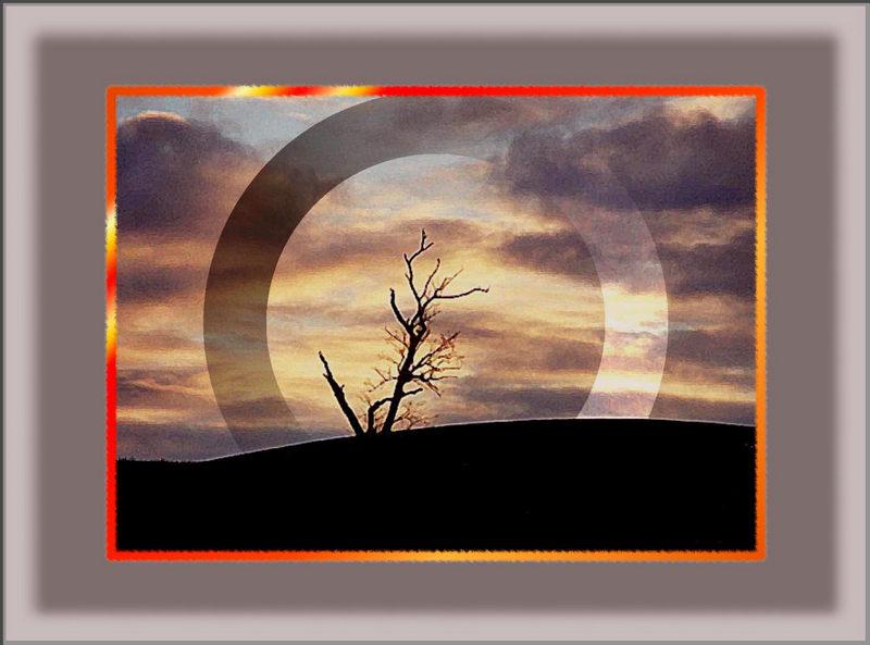 Der sakrale Abschied vom toten Baum