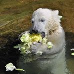 Der Salatfreak, der bin ich....