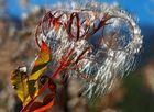 Der Samen für den Frühling! - Beauté automnale!