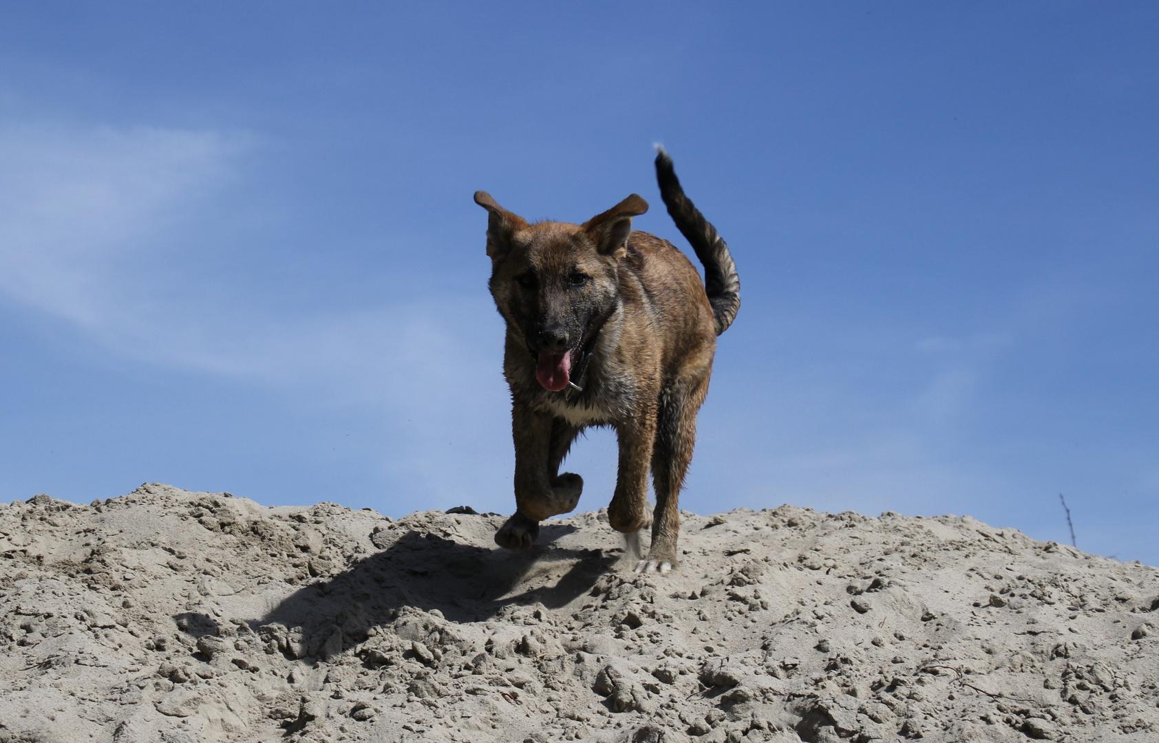 Der Sandprinz