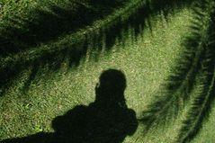 Der Schatten, das Ich und die Palmen