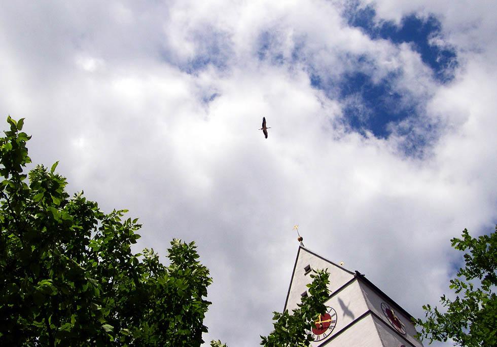 Der Schatten des Storchs