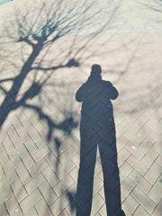 Der Schatten mitten im Baum