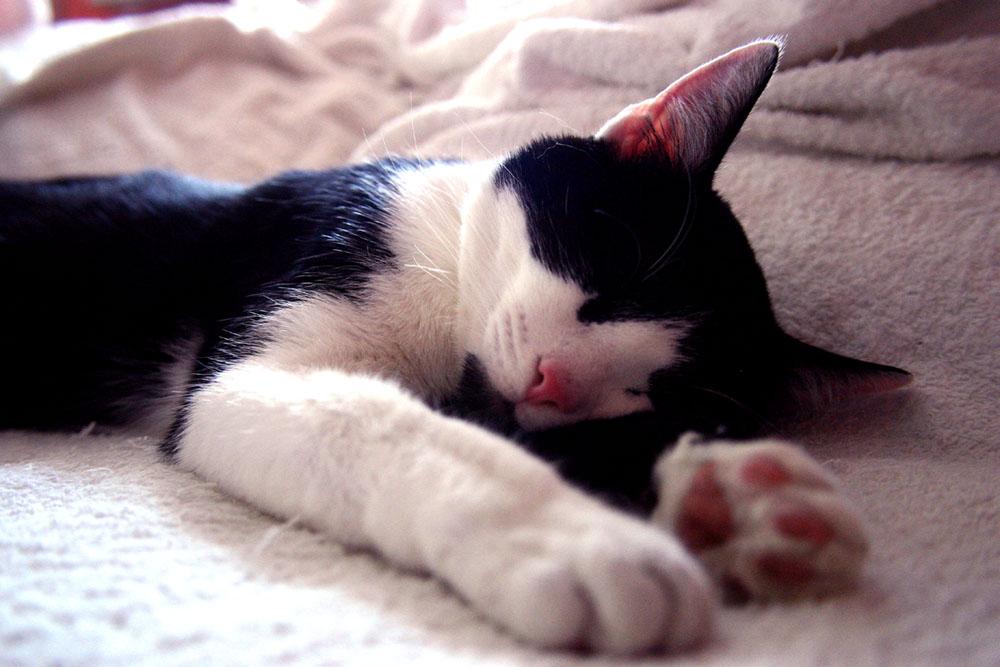 Der Schlaf des Gerechten