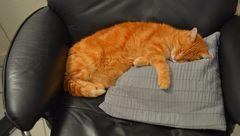 der schlafende Fuchsie (el Zorrito durmiendo)