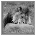 der schlafende Löwe