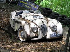 Der schlummernde Jaguar