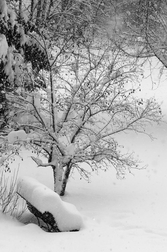Der Schnee nimmt Platz