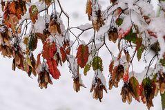 Der schnelle Übergang in den Winter