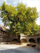 Der schöne Baum ....