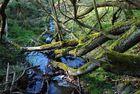 der schöne Odenwald