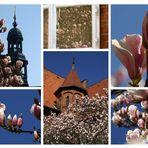 Der schönste Arbeitsplatz in Lüneburg?