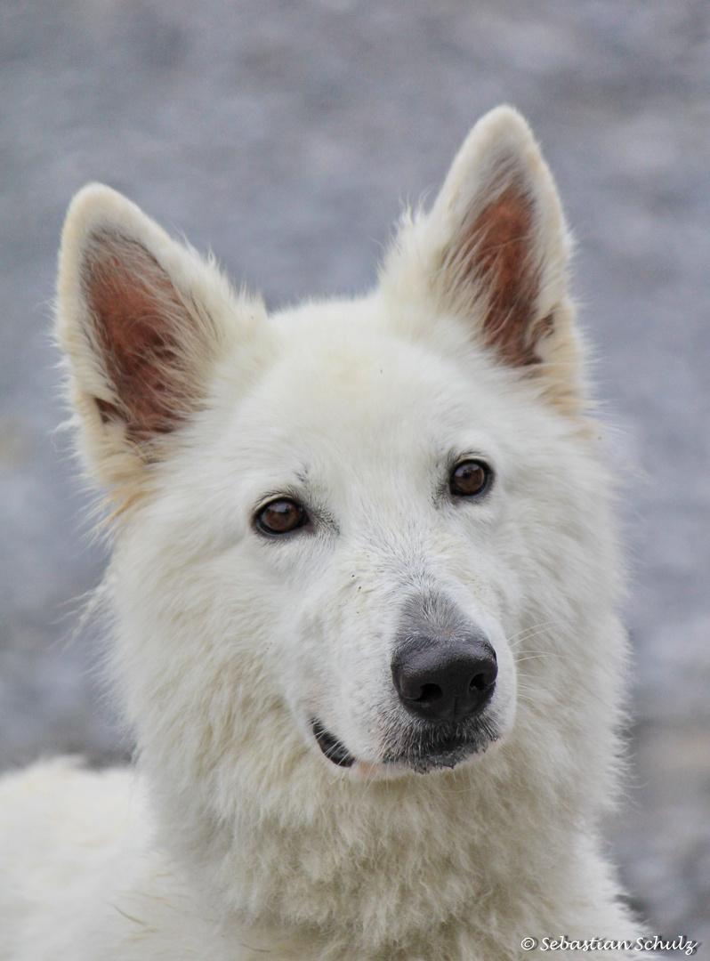 Der schönste Hund der Welt