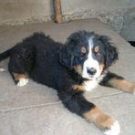 Der Schönste Hund der Welt !