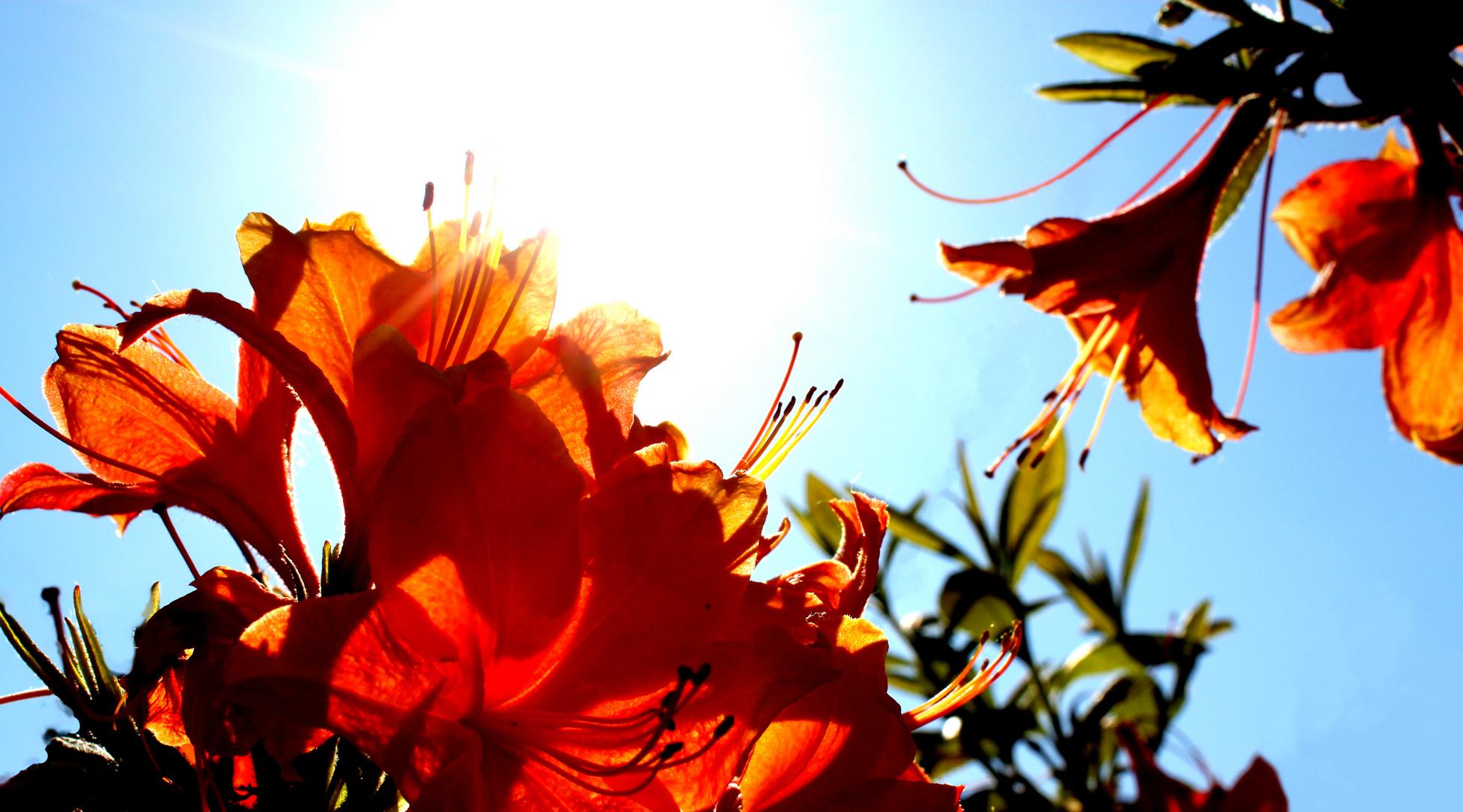 ..der schönste Strauch im Garten