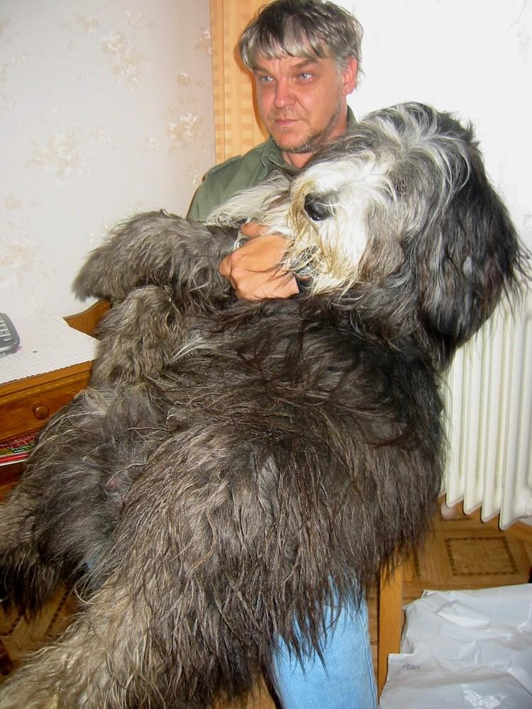 Der Schoßhund