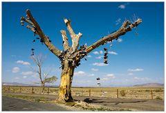 """Der """"Schuh""""-Baum"""