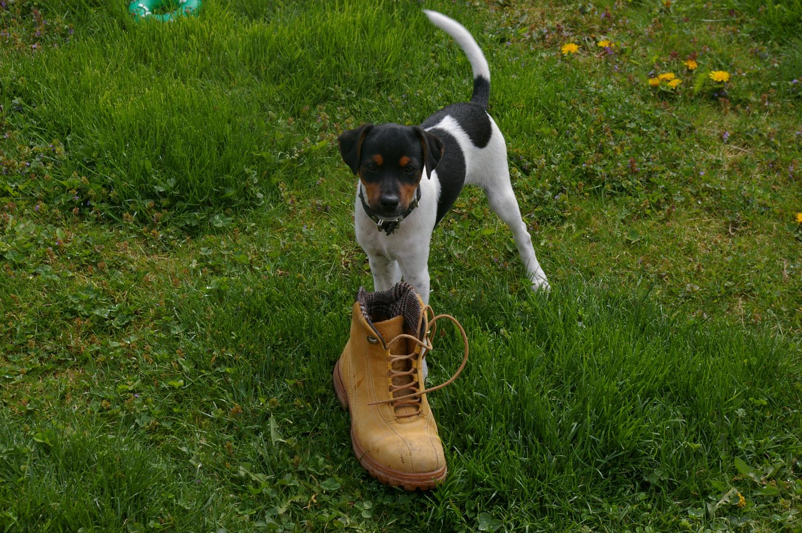Der Schuh gehört mir und Schluss