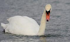 Der Schwanz mit Wasserperlen