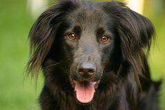 Der schwarze Hund