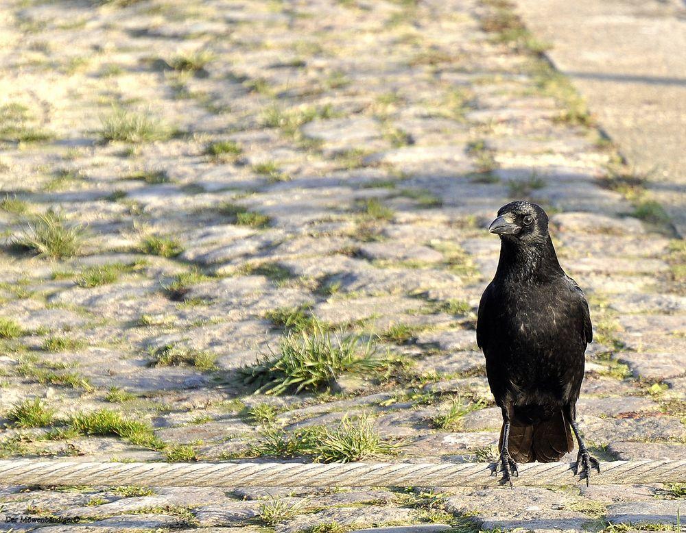 """Der """"schwarze Vogel fliegt nicht mehr """", und Ludwig ist jetzt bei der Omama"""