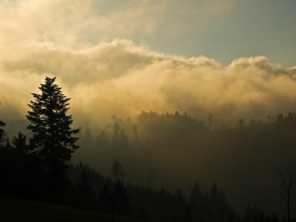 Der schwarze Wald II