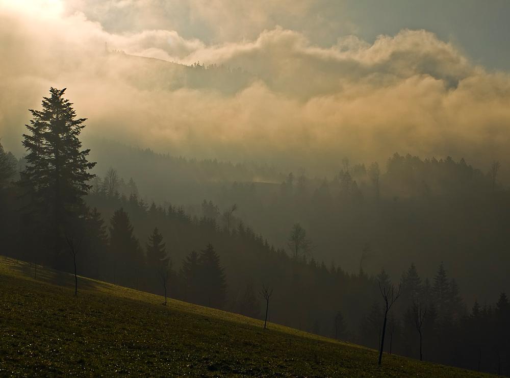 Der schwarze Wald III - mit Moosturm