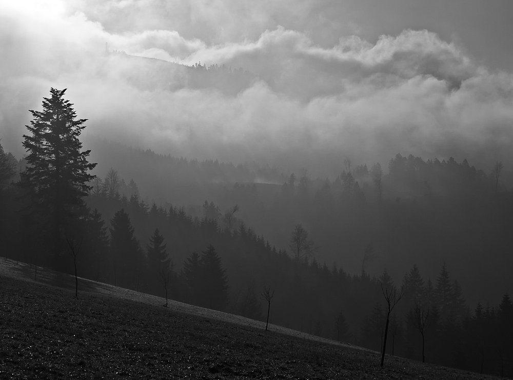 Der schwarze Wald III - mit Moosturm SW RELOAD