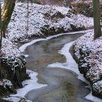 Der Schwarzspechtwald