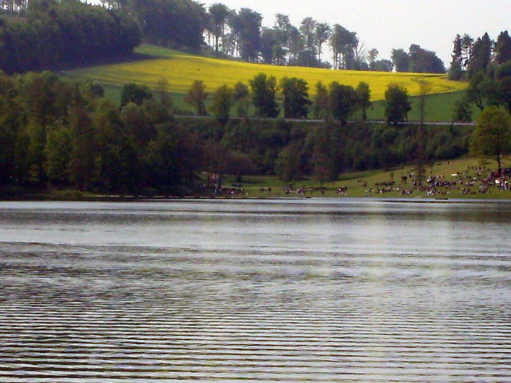 Der See umringt von der Natur