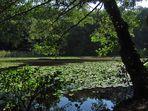 Der See vom Sept. 2011