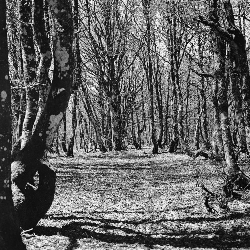 Der seltsame Wald .... II