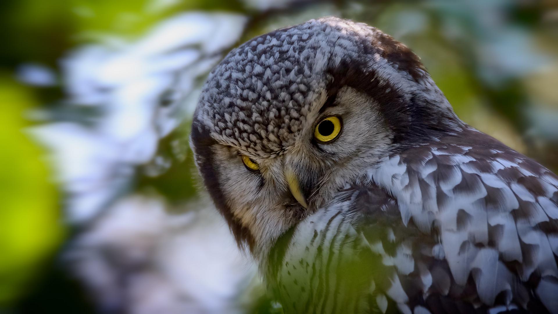 der skeptische Blick
