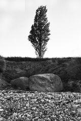 Der Solitär Baum
