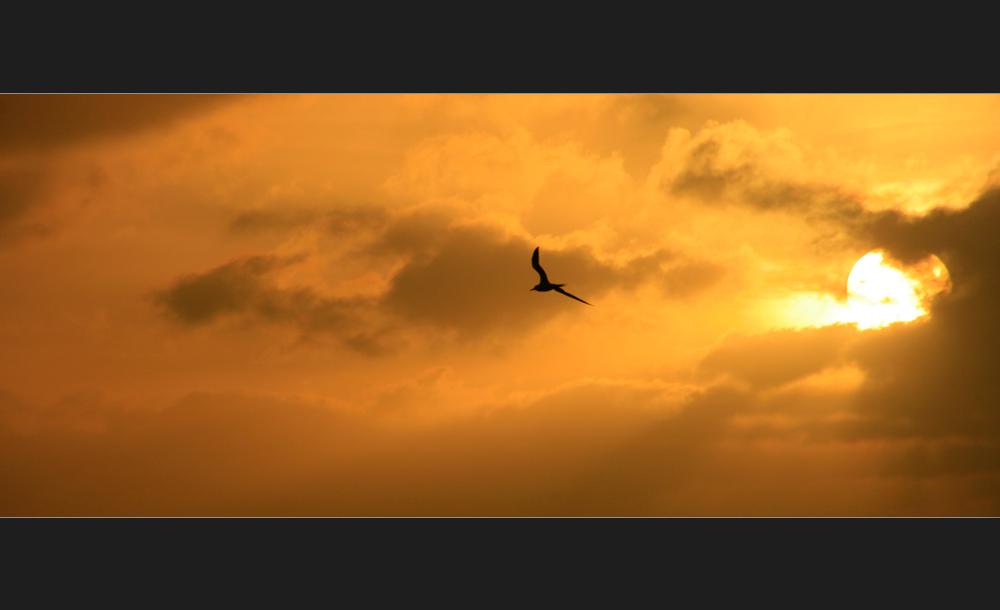 ...der Sonne entgegen