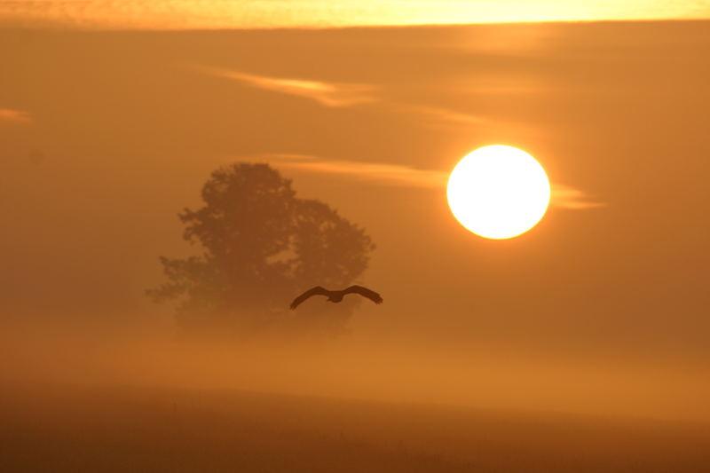 ... der Sonne entgegen