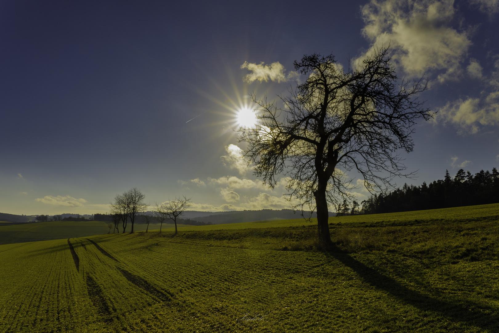 Der Sonnenstern über Bäumen