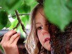 Der Spatz auf dem Kirschbaum 1