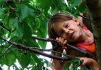 Der Spatz im Kirschbaum 3